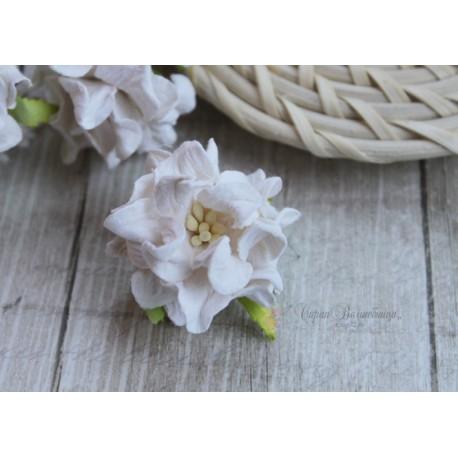 Гардении кудрявые, цвет белый, 35мм, 1 цветок