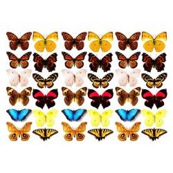 Оверлей  «Бабочки 3-Д»