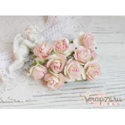 Роза Мальбери, цвет сливочные с розовым, 1 цветок