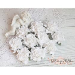 Роза Tuscany, цвет белый, 35мм, 1 цветок