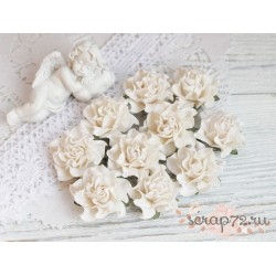 Роза Tuscany, цвет сливочный, 30мм, 1 цветок