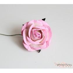 Роза крупная, цвет белый со светло-розовой окантовкой, 5 см, 1цветок