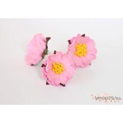 Шиповник раскрытый, цвет Розовый, 3см, 1 цветок