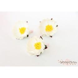 Шиповник раскрытый, цвет Белый, 3см, 1 цветок
