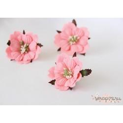 Пион, цвет Розовоперсиковый темный, 6см, 1шт