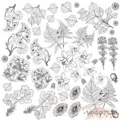 """Лист для раскрашивания аква чернилами """"Botany summer"""""""