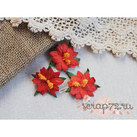Пуансетия, цвет красный, 1шт