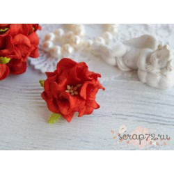 Гардения кудрявая, цвет красный, 60мм, 1 цветок