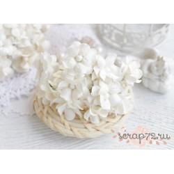 Лютик кудрявый, цвет белый, 2см, 1 цветочек