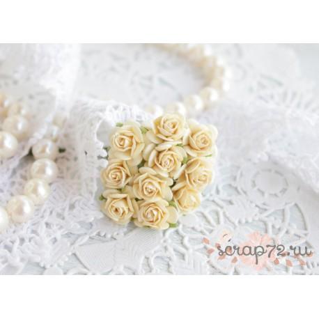Роза Мальбери, цвет сливочный, 1 цветок