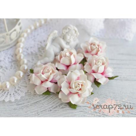 Роза двухтоновая, цвет белый и нежно-розовый, 35мм, 1 цветок