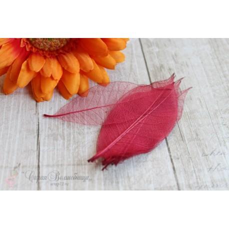 Скелетированные листья, цвет красный, от 2.5 до 7.5см, 5шт.