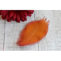 Скелетированные листья, цвет оранжевый, от 2.5 до 7.5см, 5шт.