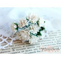 Астра, цвет айвори,  15мм, 1 цветочек
