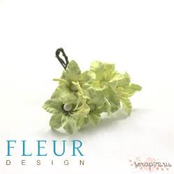 Мини-Лилии светло-зеленые , размер цветка 2,5 см, 1 цветочек