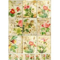 "Карточки ""Ботаника-1"", А4"