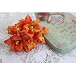 Лилия, цвет темно-оранжевый, 5см, 1шт.
