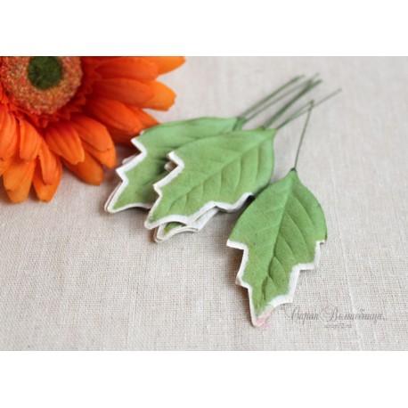 Листочки плюща, цвет зеленый с белой окантовкой, 6см, 10шт.