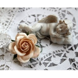 Роза Шпалера, цвет молочный, 1цветок