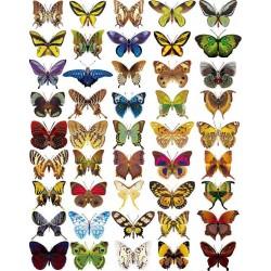 Оверлей  «Бабочки мини»