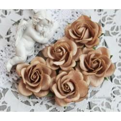 Роза Шпалера, цвет кокао, 1шт