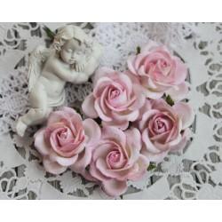 Роза Шпалера, цвет белый с нежно-розовой окантовкой, 1шт