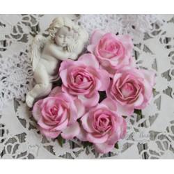 Роза Шпалера, цвет белый с темно-розовой окантовкой, 1шт