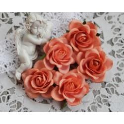 Роза Шпалера, цвет коралловый, 1шт