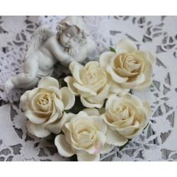 Роза Шпалера, цвет сливочный, 1цветок