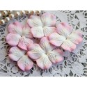 Цветы гортензии, цвет белый с розовой окантовкой, 10цветочков